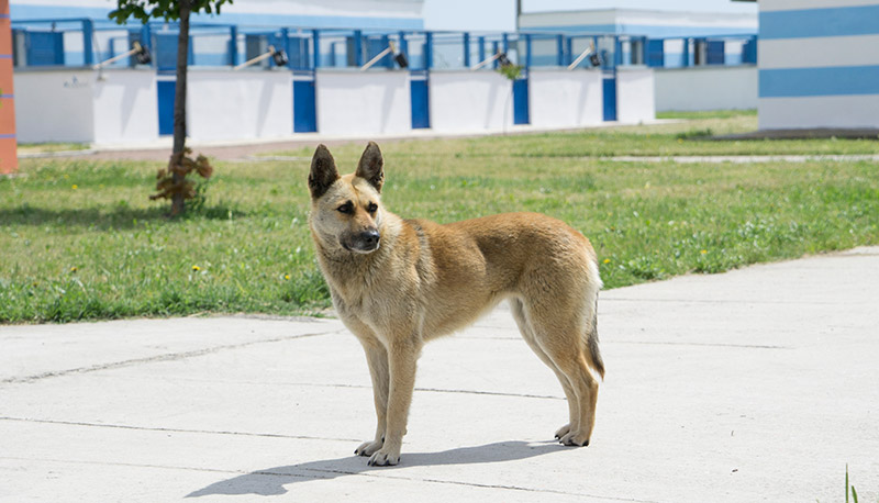 Dog in front of the Odessa Animal Welfare Center.