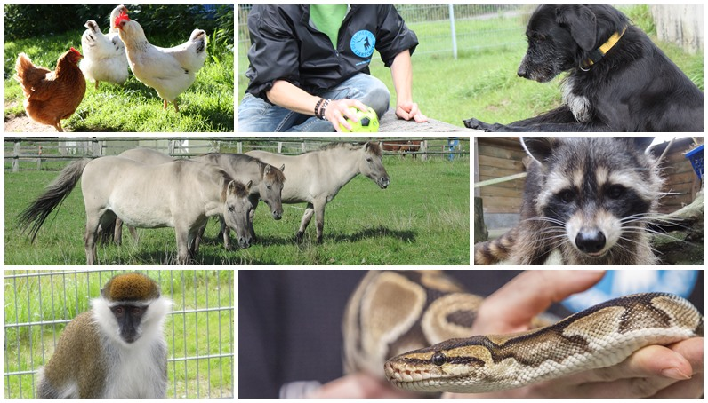 Various Animals in the Weidefeld animal welfare centre.